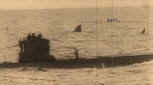 Megalodonuboat