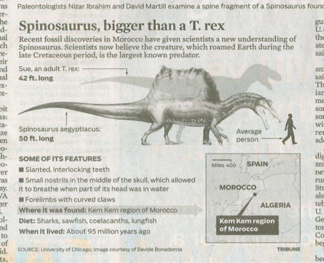 spinosaurus infographic1