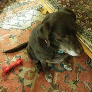dogsquare2-blog