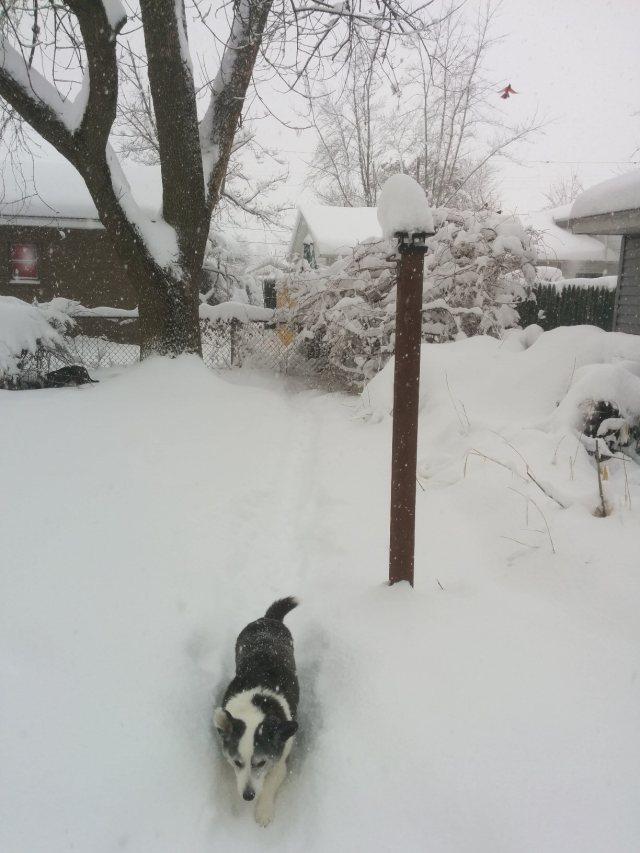 snowday-bird-full-blog