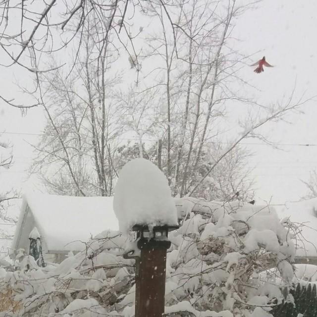 snowday-bird square