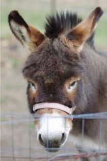 donkey2-blog