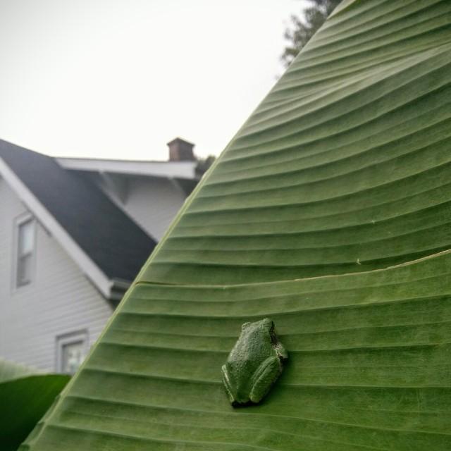 frog1-hicolor