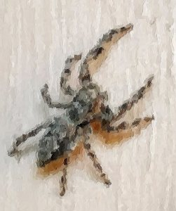 spider1-crop-brushstrokes