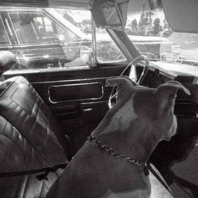 Louisville weekend-dog-blog
