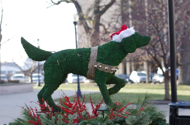 christmaswolves-photo5-blog
