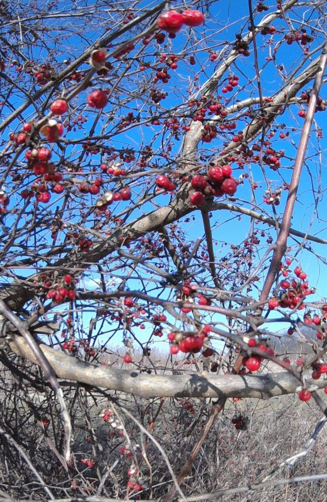 FILE0806-redberriescrop-blog