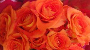 FILE0845-valentineroses3-crop-blog