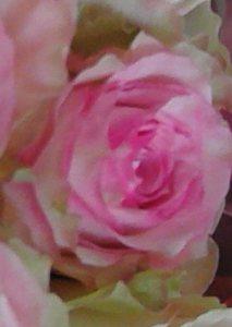 FILE0848-valentinerose-tightcrop2-blog