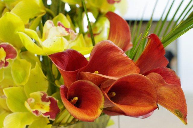 IMGP9514-cannasandorchids-crop-original-blog