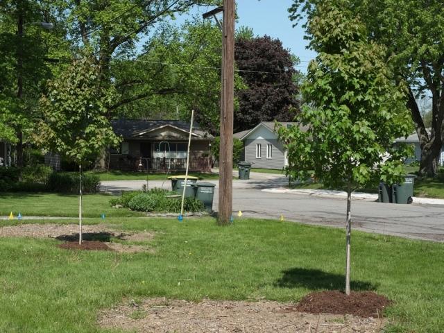 DSCF0852-twotrees-crop-blog