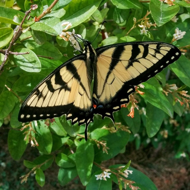 butterfly-june12-16-1-blog