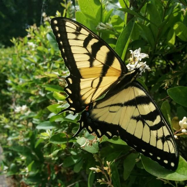 butterfly-june12-16-3-crop-blog