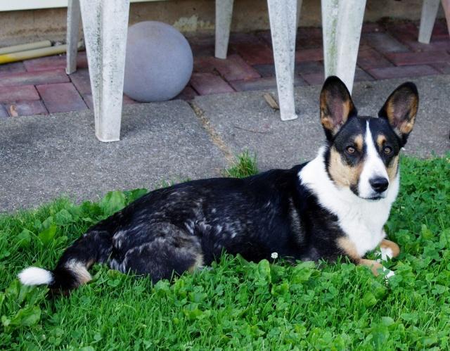 IMGP3346- portrait of Rufus--crop-tweak-crop-blog