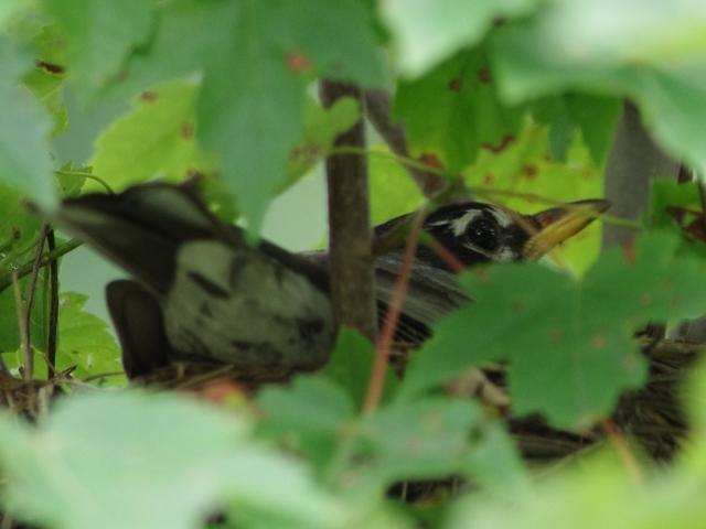 IMGP5117-mamabirdonnest-tightcrop-blog