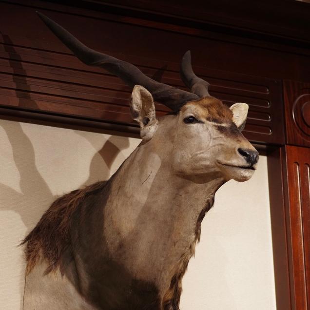 instagram-november-antelopia-cabelas-eland