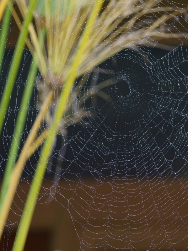 blog-spiderweb4